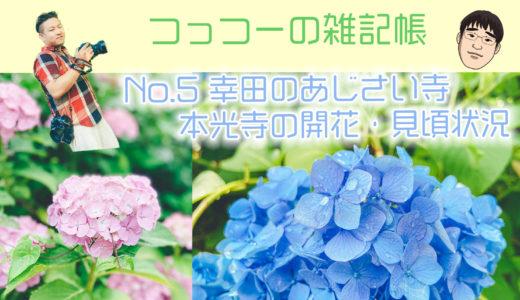 【開花状況・見頃】幸田町 本光寺のあじさいを撮りに行く (駐車場有!)