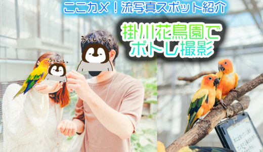 掛川花鳥園はポートレート撮影にもいいところ!近くのカフェも紹介~! ここカメ!流写真スポット紹介