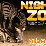 【のんほいパーク】ナイトズーで夜の動物を撮影!コツと注意点【愛知・豊橋】